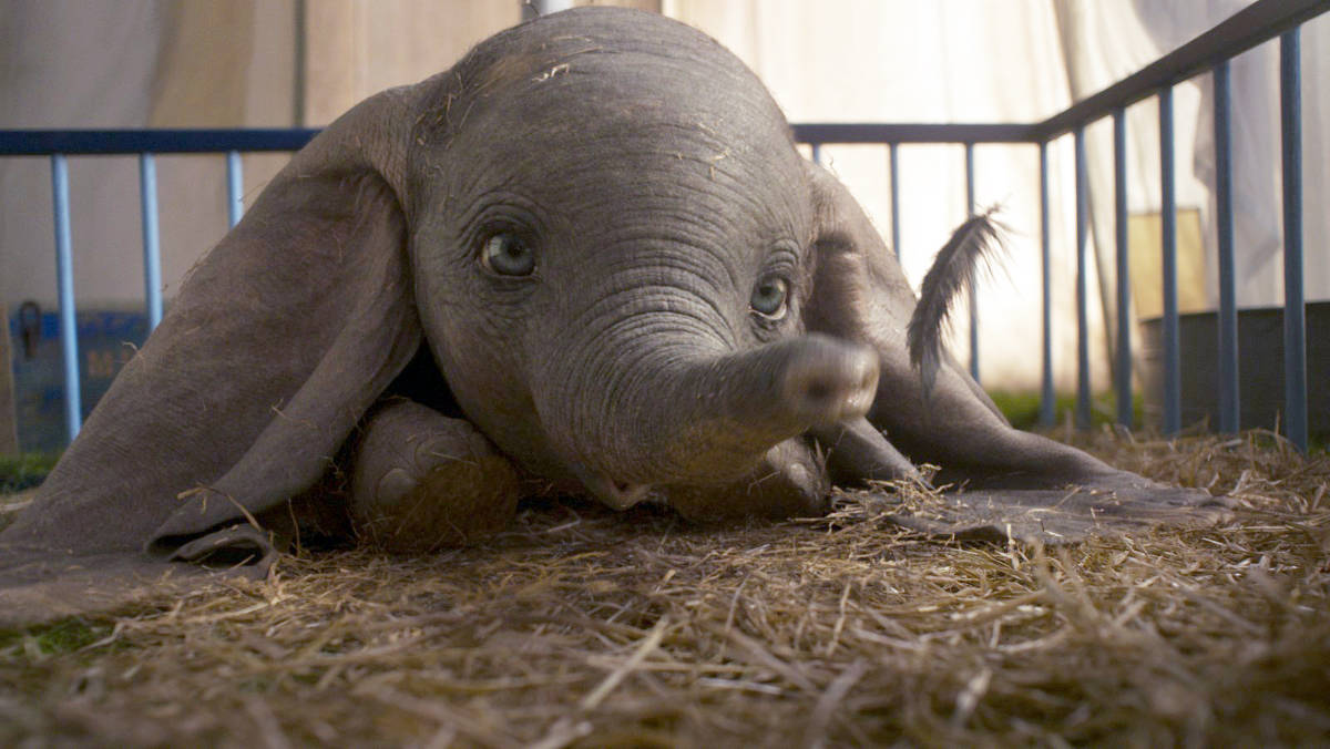 "Photo of Live-action de ""Dumbo"" ganha trailer"